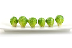 Brussel Sprouts. Row of brussel sprouts on long white plate isolated on white background royalty free stock photography