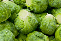 Free Brussel Sprouts Stock Images - 35454194