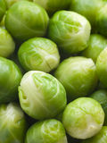 Brussel Sprouts. Close Up Of Brussel Sprouts stock photos
