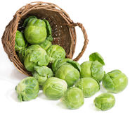 Brussel sprouts ( brassica oleracea L.) Stock Photography