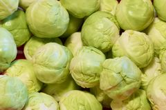 Brussel sprouts Christmas festive food close up. Uk royalty free stock image