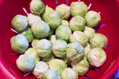 Brussel sprouts Christmas festive food in red bowl. Uk royalty free stock images