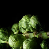 Brussel Sprouts. Close-up of fresh, organic seasonal Christmas and Thanksgiving Brussel Sprout vegetables against a dark background with generous accommodation stock image