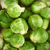 Brussel sprouts Stock Image