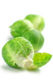 Brussel sprouts. Fresh brussel sprouts isolated on white background Royalty Free Stock Image
