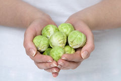 Brussel sprouts in hands Stock Images