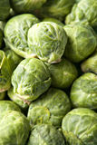 Brussel Sprouts in Pile Royalty Free Stock Photography