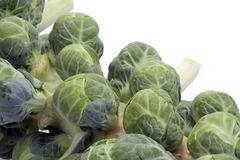 Brussel Sprouts on Stalk. Fresh brussel sprouts on stalk with white background Stock Images