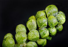 Brussel Sprouts Stalk. Fresh organic brussel sprout stalk with room for your type Stock Image