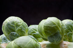 Brussel Sprouts Stem Stock Photo