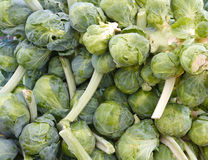 Brussel sprouts on the stem on display Stock Photography