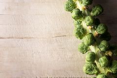 Brussel sprouts on stalk background Royalty Free Stock Photo