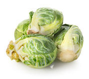 Brussel sprouts Stock Photography