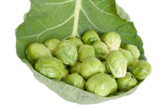 Brussels cabbage. Brussels sprouts isolated, white background Royalty Free Stock Photography