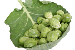 Brussels cabbage. Brussels sprouts isolated, white background Royalty Free Stock Image