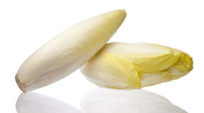Brussels Chicory isolated over white Royalty Free Stock Images