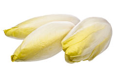 Brussels Chicory isolated over white. Without reflection Royalty Free Stock Photography