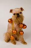 Brussels griffon and decorations of Christmas Stock Photos