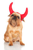 Brussels Griffon dog with devil horns Stock Photography