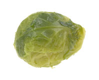 Brussels Sprout. A single Brussels sprout on a white background Stock Photo