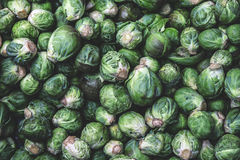 Brussels sprout background Stock Photos