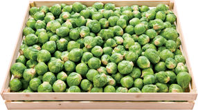 Brussels sprout in a box raw food vegetable Royalty Free Stock Image