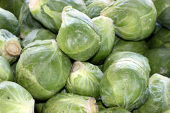 Brussels sprout, Brassica oleracea Gemmifera Royalty Free Stock Image
