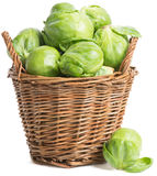 Brussels sprout ( Brassica oleracea L.) Royalty Free Stock Photo