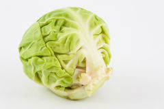 Brussels sprout Brassica oleracea var. gemmifera. Isolated in white background Stock Images