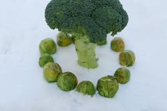 Brussels sprout and broccoli, close-up view Royalty Free Stock Photography