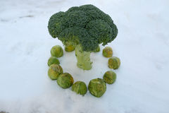 Brussels sprout and broccoli Royalty Free Stock Image