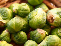 Brussels Sprout Royalty Free Stock Image