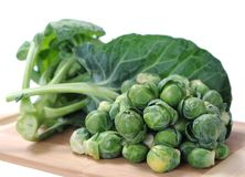 Brussels sprout Stock Image