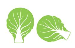 Brussels Sprout. Vegetable. Vector illustration EPS Stock Images