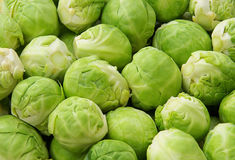 Brussels sprouts 04 Stock Photography
