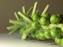 Brussels sprouts. On a stalk, isolated royalty free stock image
