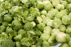 Brussels sprouts, Stock Photos