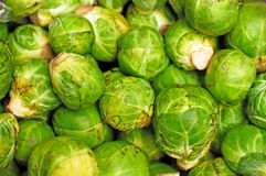 Brussels sprouts Stock Images