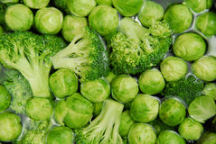 Brussels sprouts and broccoli Royalty Free Stock Photo