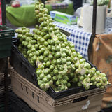 Brussels sprouts in bushel basket Stock Images