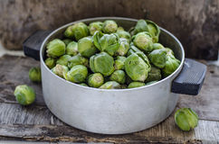 Brussels sprouts cabbage Royalty Free Stock Photo