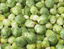 Brussels sprouts - Brassica oleracea var. gemmifera. The Brussels sprouts, characterized by their small size and green color Royalty Free Stock Image