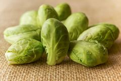 Brussels Sprouts Close Up stock photos