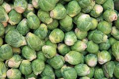 Brussels Sprouts on Farmers Market royalty free stock photography