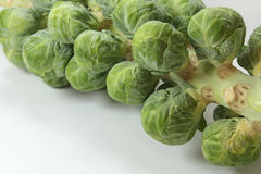 Brussels sprouts. Fresh green Brussels sprouts on the stalk stock image