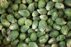 Brussels sprouts fresh green vegetables. Background Royalty Free Stock Image