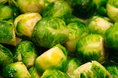 Brussels Sprouts Stock Photos