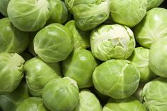 Brussels sprouts (landscape) Stock Image