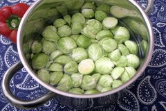 Brussels sprouts. Some fresh green brussels sprouts in a bowl Royalty Free Stock Photography