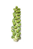 Brussels Sprouts on Stalk Stock Photo